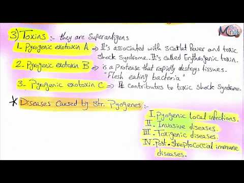 2- Bacteriology   Streptococci   Dr. Azza
