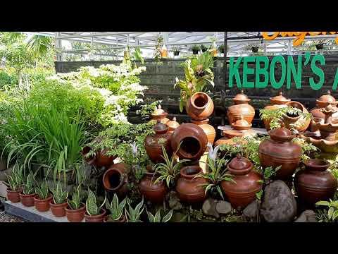 toko-tanaman-kebon-agro-jogja-hias-buah-bunga-dekorasi-taman-pot-pupuk-obat-perlengkapan-kebun-#hobi