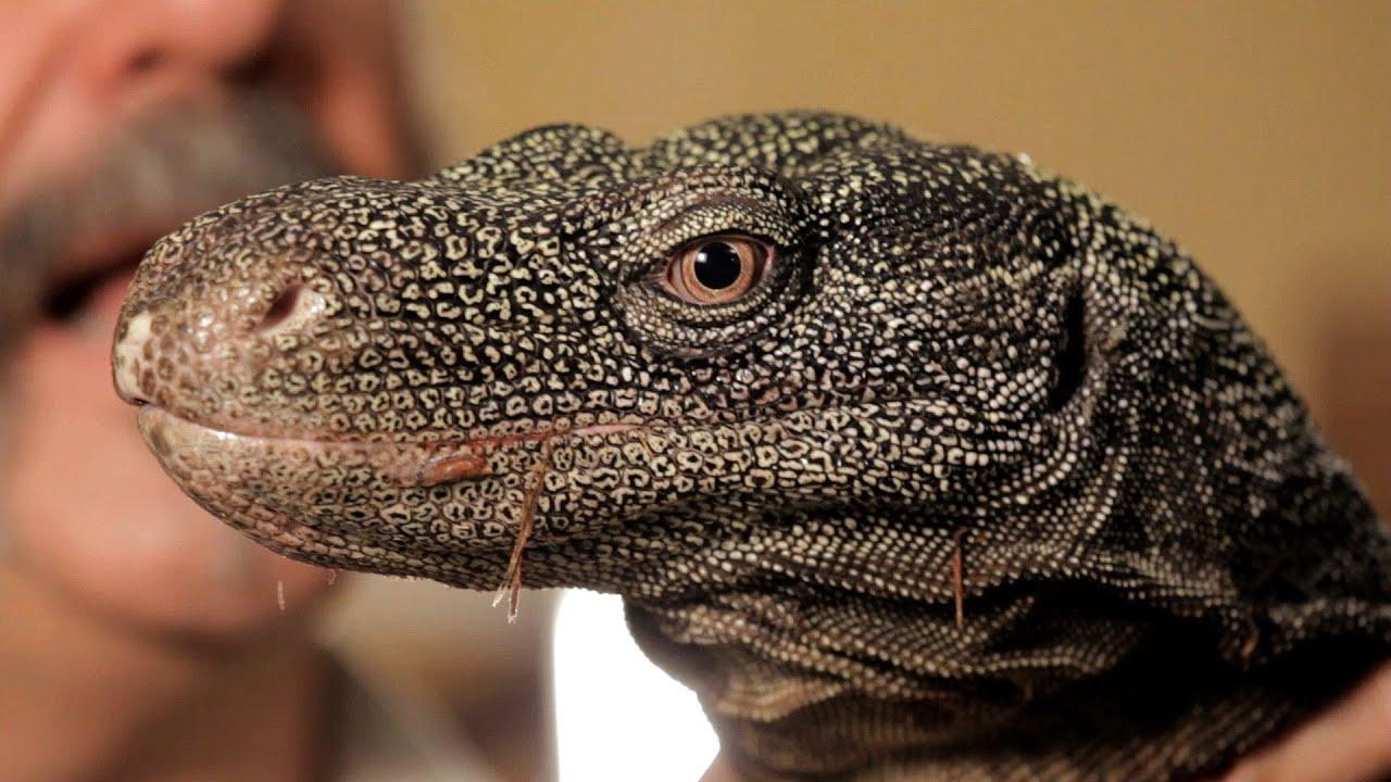 Cool Pet Lizards | www.pixshark.com - Images Galleries ...