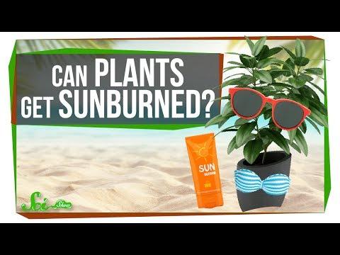 Can Plants Get Sunburned?