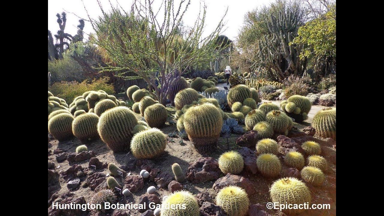 Attrayant Huntington Botanical Gardens Tour   YouTube