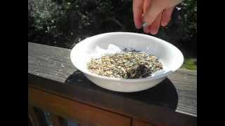 Winnowing Your Seeds. How to winnow the chaff
