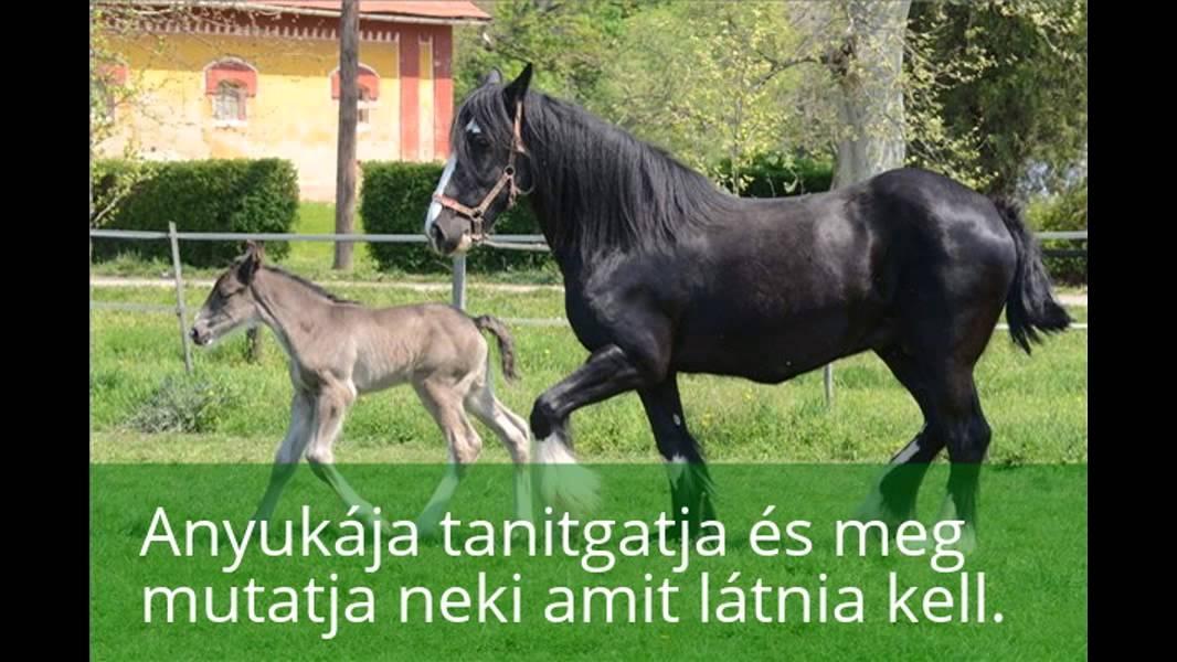 A ló férgessége – így védekezzünk ellene   ronaykuria.hu