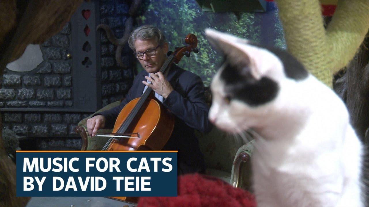 American Cellist Cuts Album For Cats Youtube