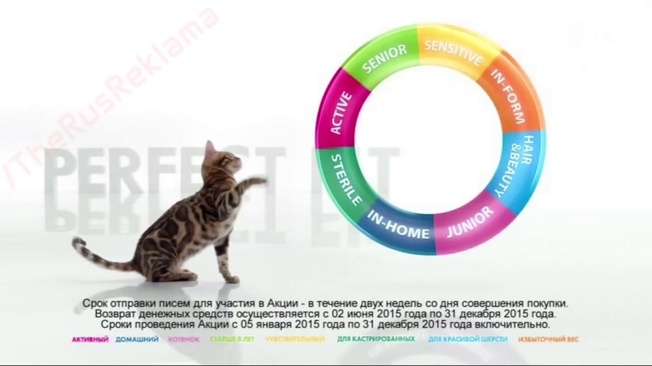 Кот из рекламы перфект фит