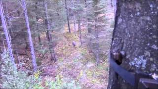 Reel Hunting Outdoors- Michigan Public Land Hunt