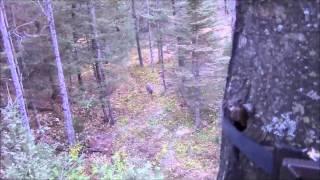 Reel Hunting Outdoors- Michigan Public Land Hunt