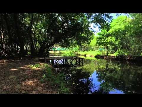 Hutan Mangrove, Kesunyian diantara kebisingan