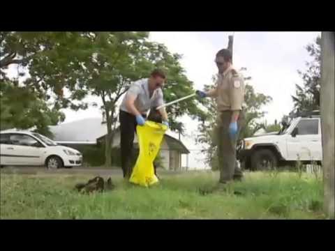 megabats dead after heatwave Queensland 04012014