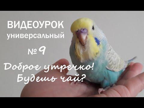 """🎧 Учим попугая говорить. Урок 9: """"Доброе утречко! Будешь чай?"""""""