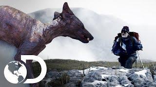 Misteriosos casos en el mundo | Archivo de lo inexplicable | Discovery Latinoamérica