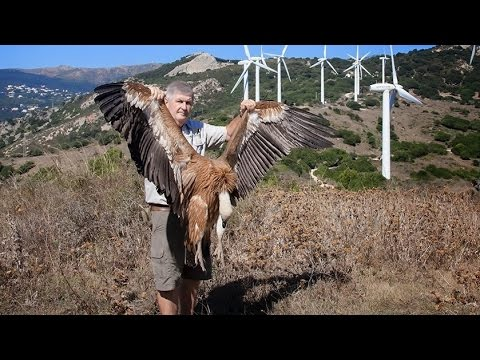 Wind-Farm Bird-Deaths, Apocalypse II