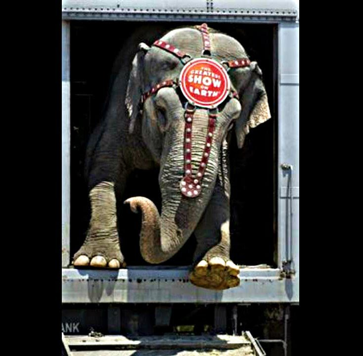 Circus animal abuse facts