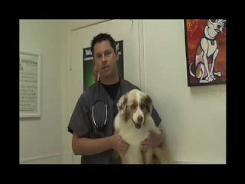 Skin Allergies in Dogs and Cats Part 1