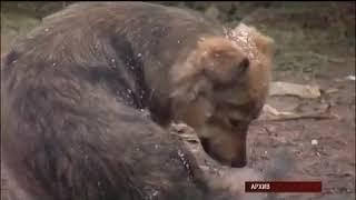 """Разъяснения Федерального закона №498-ФЗ """"Об ответственном обращении с животными"""""""