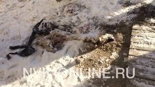 Труп собаки в Якутске