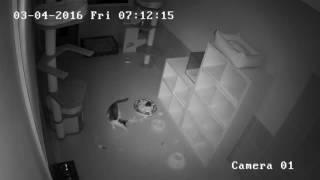 Что делают кошки ночью?