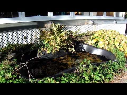 Jefferson Salamander found near Barries Lake in North Dumfries