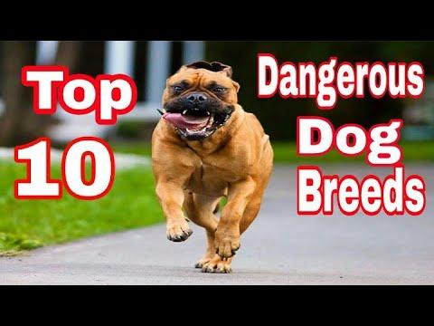 """10 Most Dangerous Dog Breed In World / Popular dog breeds / by """"Aryan Dog Club"""" Aryandogclub"""