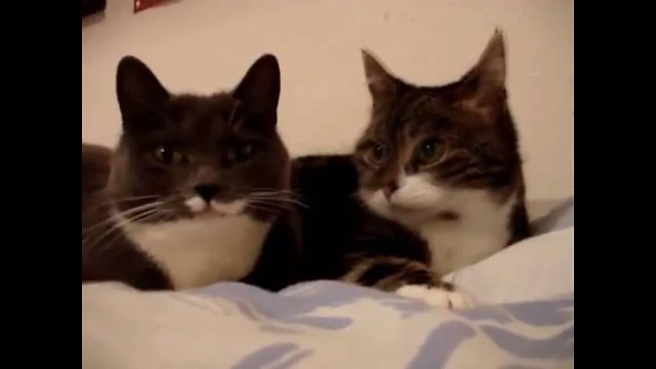 Разговоры котов слушать