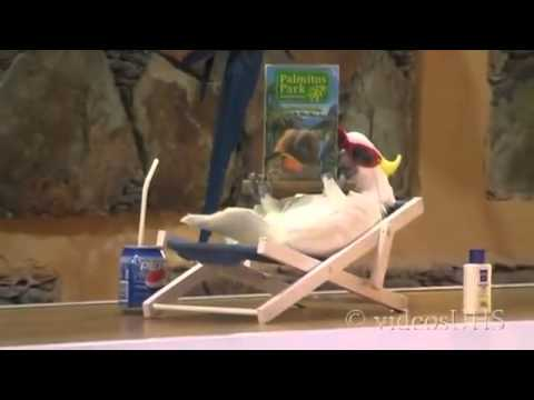 Самые умные попугаи в мире