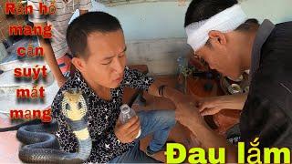 Liều Mạng Bắt Rắn Hổ Mang Và Cái Kết Suýt Mất Mạng | SBATVC