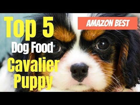 Top 5 Best Dog Food for king Charles Cavalier Puppy 2020.