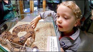 Klappar en orm VLOGG