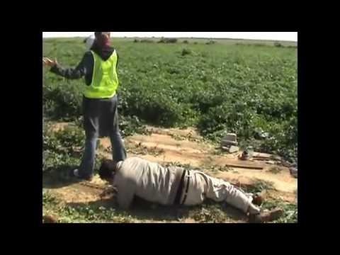 Israel taken pot shots at farmers gathering vegetables