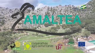 AMALTEA La gestión eficiente y sostenible para el ganado caprino YouTube Videos