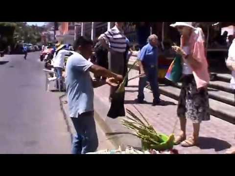 Palmas para Bendecir en Mazatlán 2013