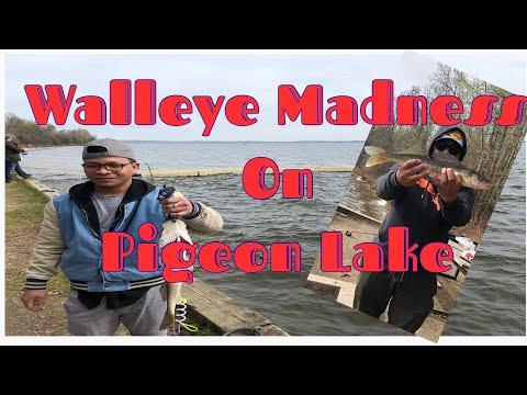 PIGEON LAKE FISHING  BITE After BITE After BITE! GOOD DAY OF FISHING WALLEYE