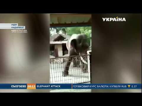 Зграя слонів атакувала
