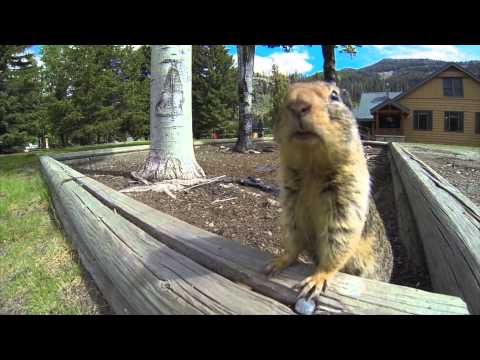 Gopher licks GoPro ... funny & cute