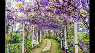 Tôi vẫn yêu hoa màu tím -NGUYEN TUYET TRINH