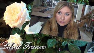 ДАНА БОРИСОВА#Поведение Французских Родителей на Карнавале