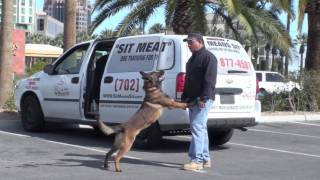 K9 Dog Training - Dog Trainer Fred Hassen
