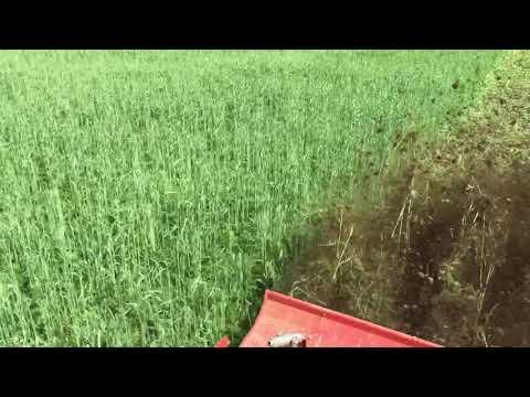Fräsen vom Wickroggen