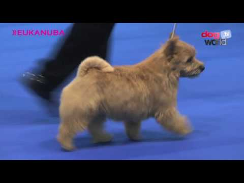 Manchester Dog Show 2017 - Best Puppy in Show