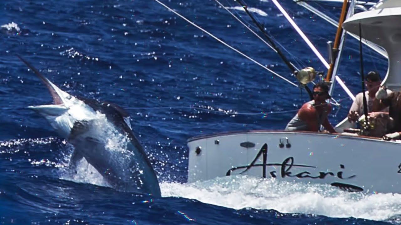 これまでに捕獲された世界最大の水中生物が衝撃的