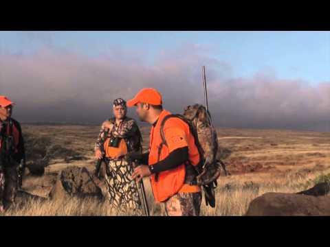 2014 lanai state axis deer hunt