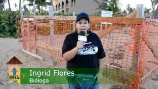 Nacimiento de Tortugas en Palmas del Mar Humacao - Por Virtualizate.net Thumbnail