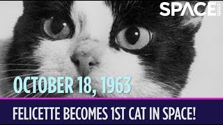 OTD in Space - Oct. 18: Félicette Becomes the 1st Cat in Space!