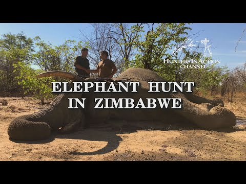 Elephant Hunt in Zimbabwe trailer