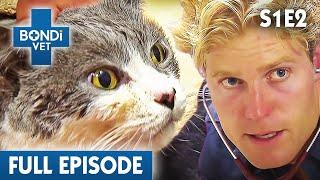 cat-left-in-bondi-beach-s01e02-bondi-vet