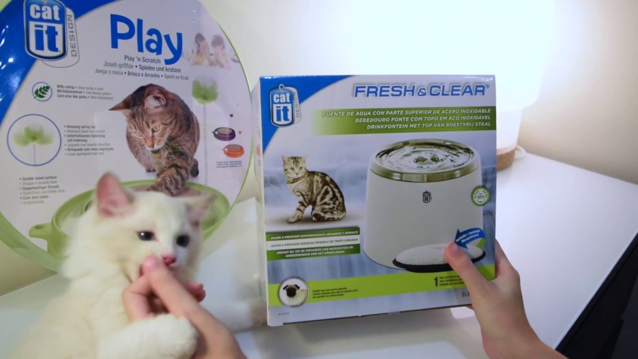 Hagen Catit Fresh Clear Water Fountains Play Scratch Cat Toy