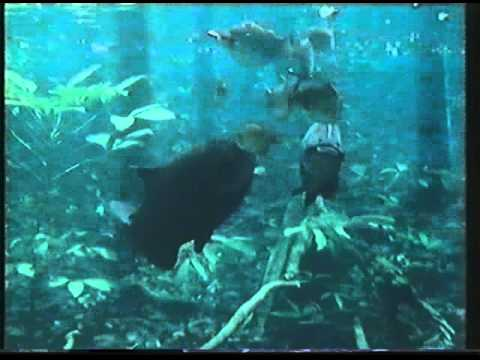 BBC Amazon The Flooded Forest 02