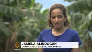 'Panama disease' destroys Philippine banana orchards