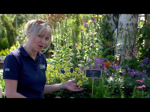 Wildlife Gardening Top Tips