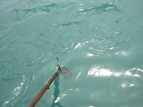 Galapagos Shark Feeding